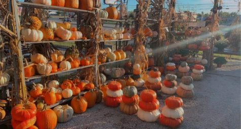 Pumpkin shopping at Sunshine Grow Shop